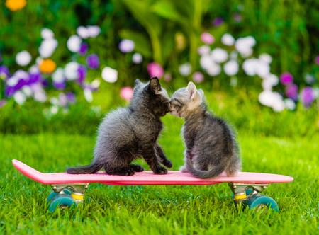 kitten: two kittens kiss