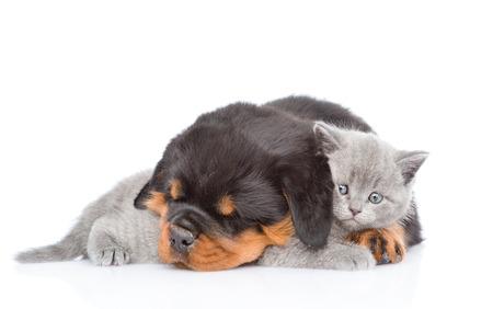 Sleeping rottweiler puppy omarmen schattig kitten. Geïsoleerd op een witte achtergrond.