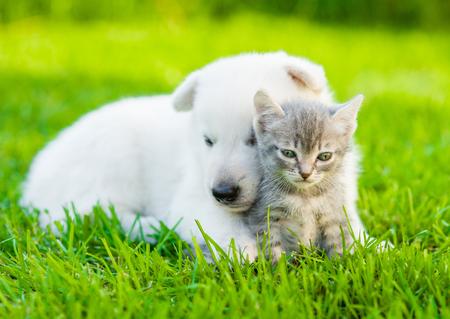cute kittens: White Swiss Shepherd`s puppy hugging kitten on green grass.