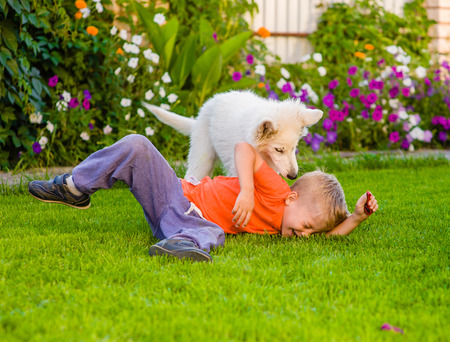 canine: White Swiss Shepherd`s puppy and kid playing together on green grass. Stock Photo