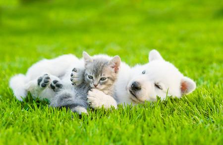Bílý švýcarský Shepherd`s štěně hrát s malou kotě na zelené trávě