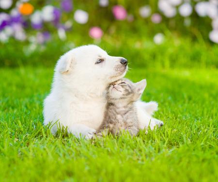puppy love: Perrito del pastor suizo blanco acostado con el gatito en la hierba verde