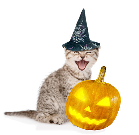 dressed: Angry cat  with pumpkin and hat for halloween. isolated on white background. Stock Photo