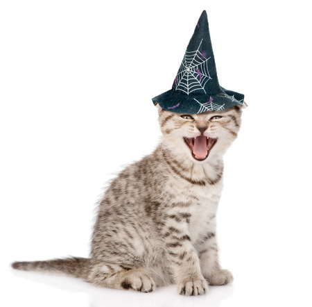 Angry cat  with hat for halloween. isolated on white background. Stock Photo
