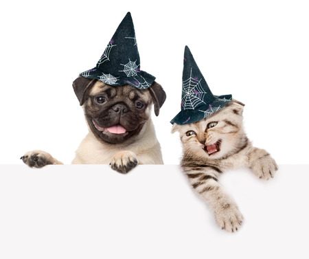 dressed: Cat and dog with hats for halloween looking out because of the poster. isolated on white background. Stock Photo