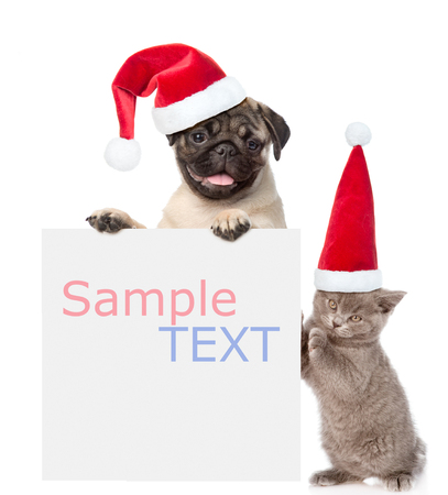 Cat and Dog with red christmas hats peeking from behind empty board and looking at camera. isolated on white background.