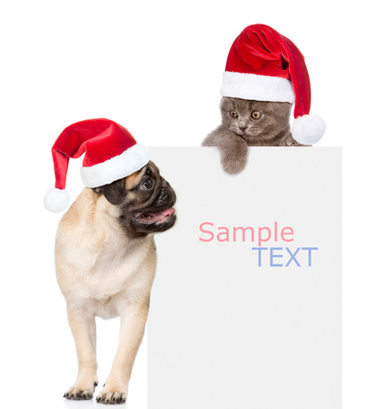 dog christmas: Pug puppy and small kitten with red Santa Claus hats above white banner.  isolated on white background.