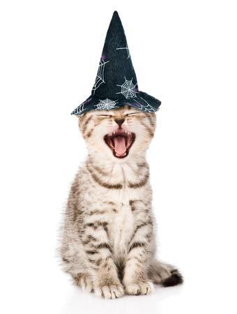 bruja: Gato enojado con sombrero para Halloween. aislado en el fondo blanco.