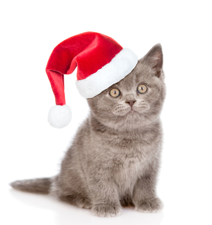 kitten: kitten with red christmas hat  looking up. isolated on white background.