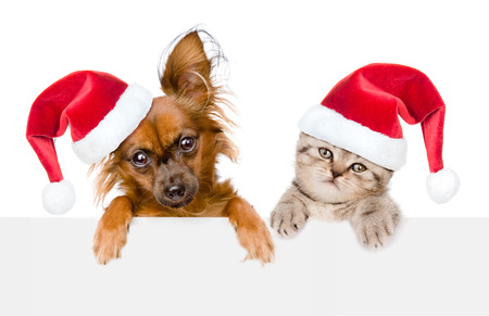 kitten: Puppy and kitten with red christmas hats peeking from behind empty board and looking at camera. isolated on white background.