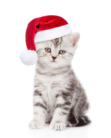 kitten: Tabby kitten with red christmas hat looking at camera. isolated on white background. Stock Photo