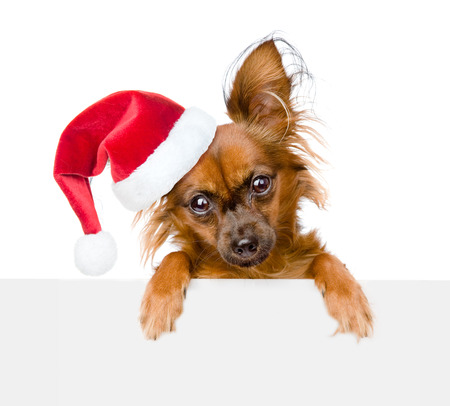 Puppy with red christmas hat peeking from behind empty board and looking at camera. isolated on white background. Stock Photo