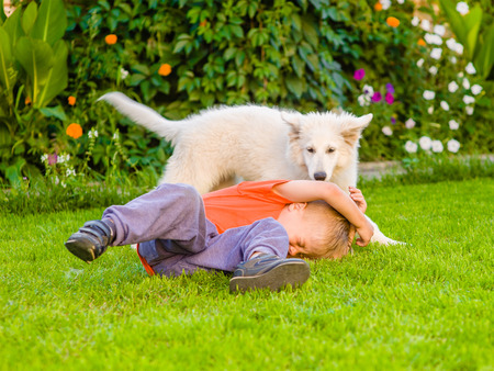 White Swiss Shepherd`s puppy and kid playing together on green grass. Stock Photo