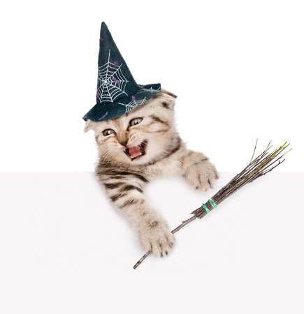 besom: scottish kitten with hat for halloween and with witches broom stick looking out because of the poster. isolated on white background.
