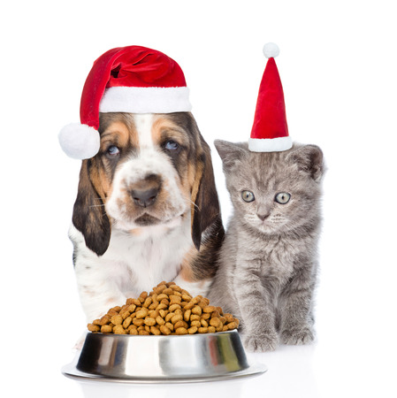 a little dinner: Kitten and puppy in red santa hats with bowl of dry cat food. isolated on white background.