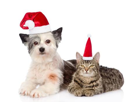 weihnachtsmann lustig: Katze und Hund in den roten Weihnachtshüten liegen zusammen. isoliert auf weißem Hintergrund.
