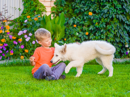 berger: White Swiss Shepherd`s puppy and kid playing together on green grass. Stock Photo