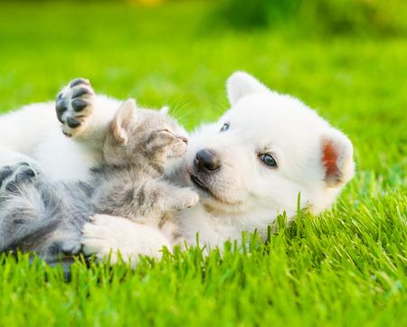 Zwitserse witte Shepherd`s puppy spelen met kleine kitten op groen gras.