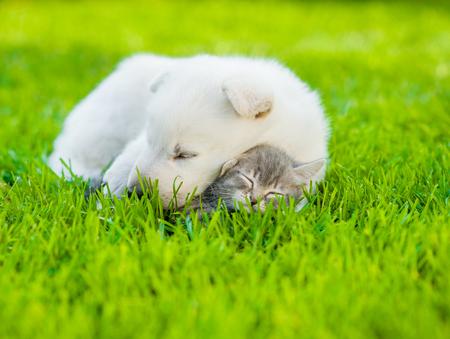amor adolescente: dormir del pastor suizo blanco cachorro abrazando pequeño gatito en la hierba verde.