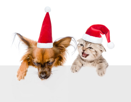 small dog: Puppy and kitten with red christmas hats peeking from behind empty board. isolated on white background.