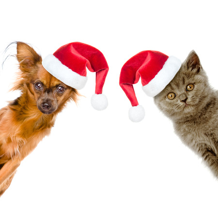 peep out: Funny portrait of a cat and a dog in red santa hats.