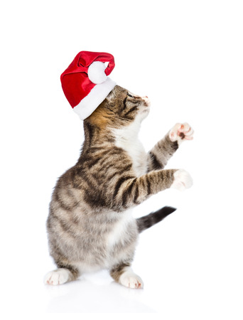 white playful: Playful kitten in red santa hat looking up. isolated on white background.