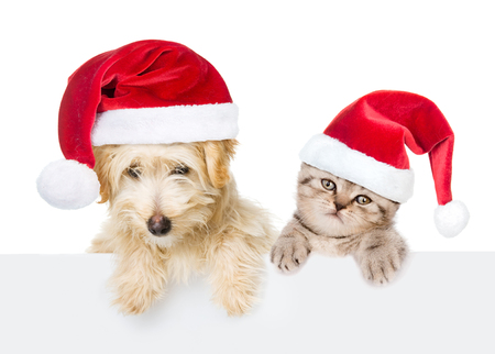 holiday pets: Cat and dog with red christmas hats peeking from behind empty board. isolated on white background. Stock Photo