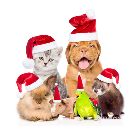 christmas hat: Large group of pets in red christmas hats. isolated on white background.