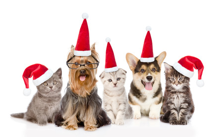 Group cats and dogs in red santa hats looking at camera. isolated on white background. Stock Photo