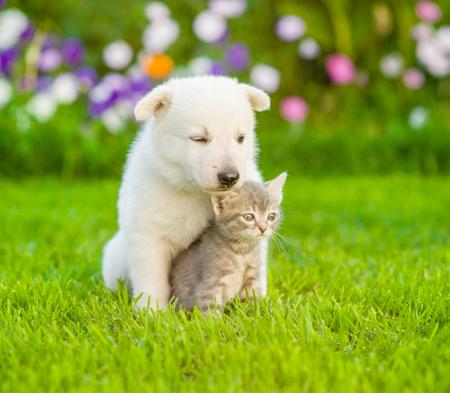 puppy love: White Swiss Shepherd`s puppy hugging kitten on green grass.