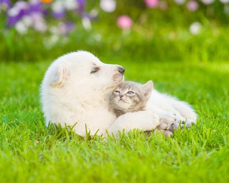 kitten: puppy hugging a kitten on the green grass.