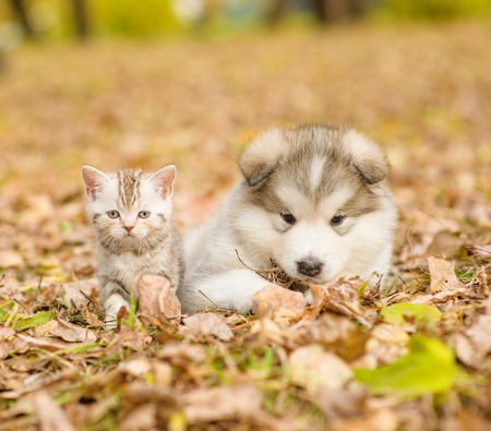 puppy and kitten: portrait of a puppy and a kitten for a walk in the autumn park.