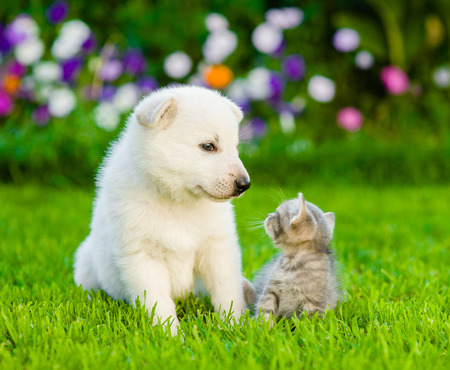 Puppy and kitten on green grass looking at each other.