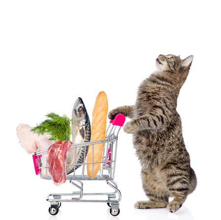 up view: Cat with shopping trolley full of food. isolated on white background. Stock Photo