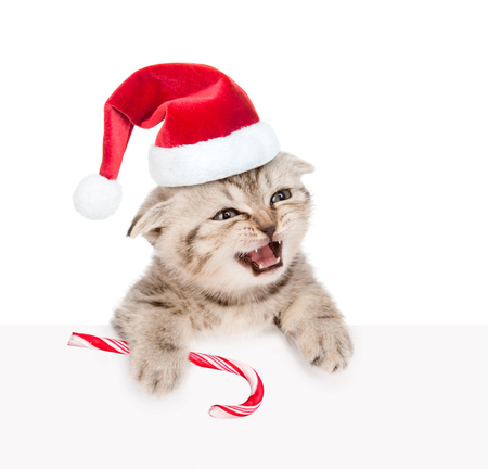 Meowing kitten in red santa hat  with Christmas candy cane looking out because of the poster. isolated on white background.