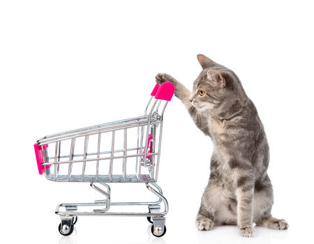 Cat with shopping trolley. isolated on white background.