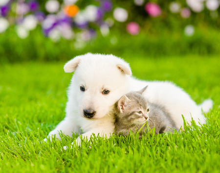 PUPPIES: Tiny puppy and kitten lying on green grass. Stock Photo