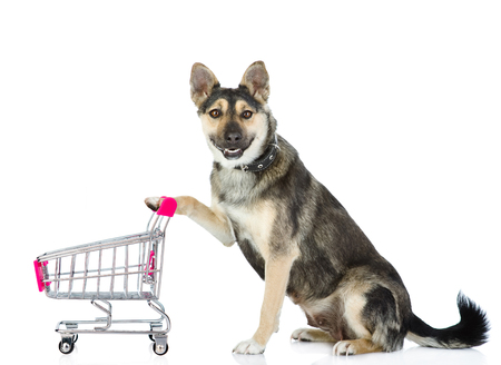 Dog with shopping trolley. isolated on white background. Stock Photo