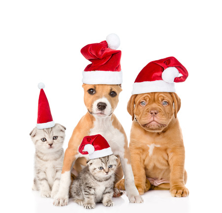 santa helper: Group of cats and dogs in red christmas hats. isolated on white background.