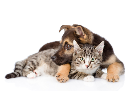 white cats: Mixed breed dog embracing tabby cat. isolated on white background. Stock Photo