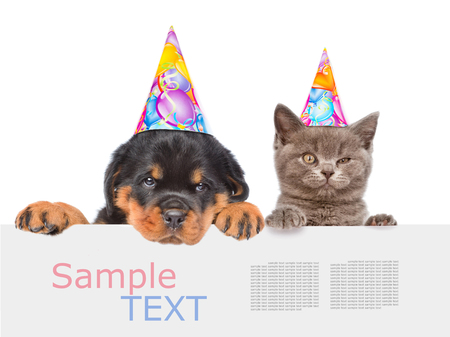 white dog: Cat and Dog in birthday hats peeking from behind empty board and looking at camera. isolated on white background. Stock Photo