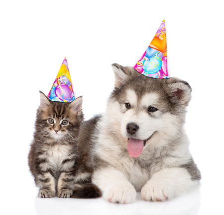 子犬と子猫の誕生日帽子一緒にカメラ目線で。白い背景上に分離。
