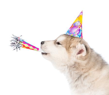 생일 모자에 휘파람 불고 개입니다. 흰색 배경에 고립.
