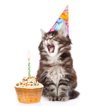 생일 모자에있는 고양이는 케이크에 양초를 날려 버린다. 흰색 배경에 고립. 스톡 콘텐츠