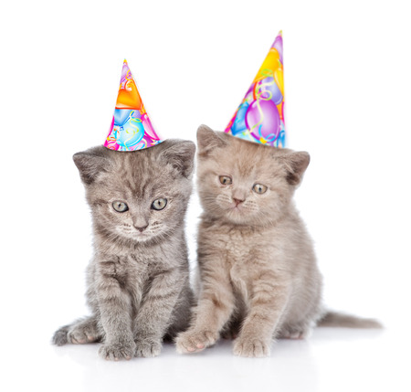 party hat: Two funny kittens with birthday hats. isolated on white background. Stock Photo