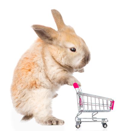 El pequeño conejo con carrito de la compra. aislado sobre fondo blanco. Foto de archivo