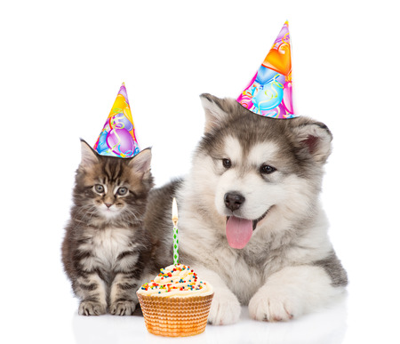 holiday pets: Puppy and kitten in birthday hats. isolated on white background. Stock Photo