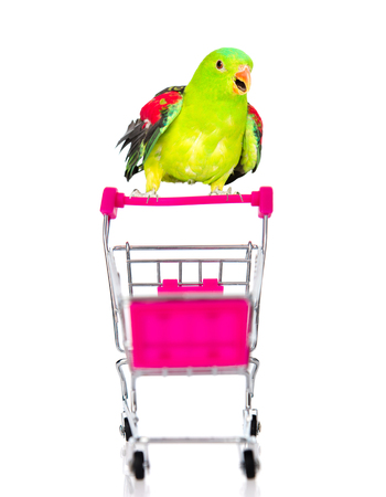 siting: Parrot siting on shopping trolley. isolated on white background. Stock Photo