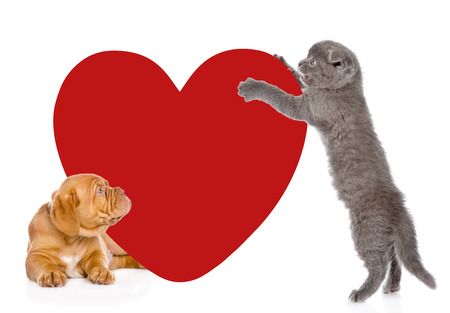 paramour: playful kitten and puppy with big red heart. isolated on white background.