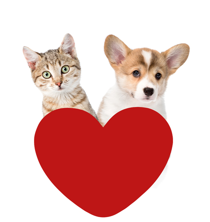 paramour: Cat and Dog above red heart. isolated on white background. Stock Photo